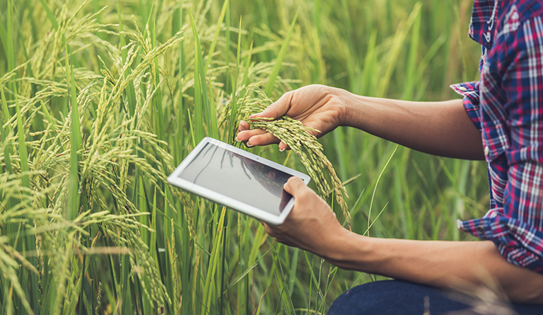 How W2S mutually connect every Indian farmer and potential buyer through technology solutions?